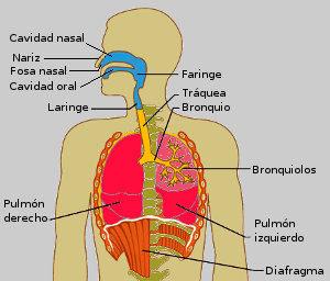 Respirar dolor pulmones al hondo