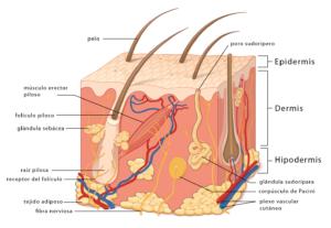 dermatitis en las manos biodescodificacion